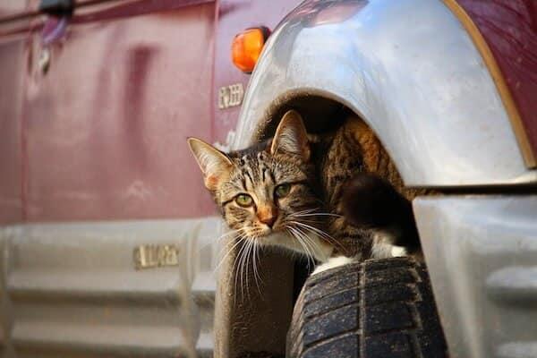 Gato en la rueda de auto
